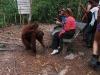 Orangutan Tanjung Puting